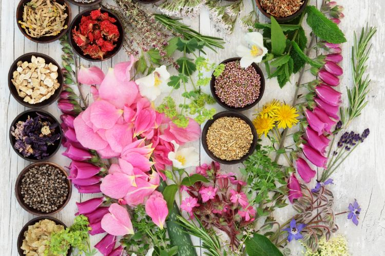 Herbal Medicine: The Power of Plants
