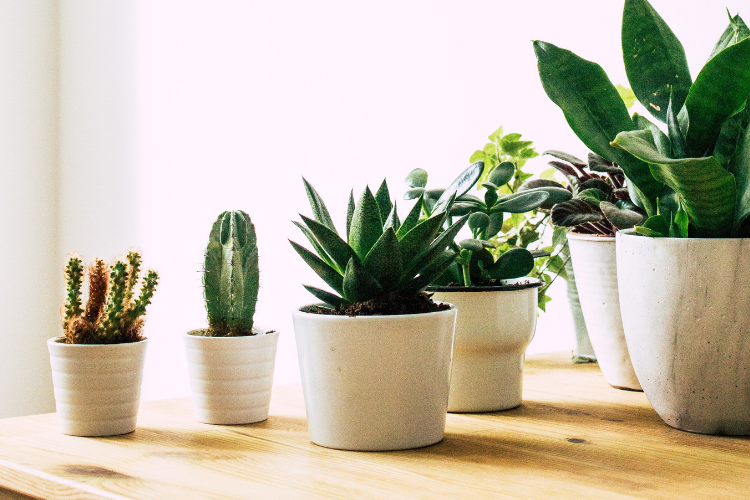 Indoor Plants For Air Pollution