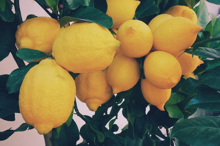 Why lemon water should be your new years resolution